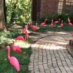 Pink Plastic 3d flamingo rental flock a yard rental cincinnati ohio